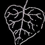 Lindenblatt klein-grau